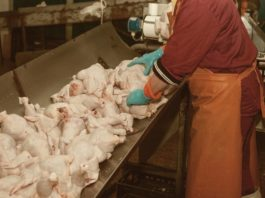 Poultry farm worker highly needed in Canada